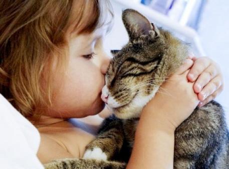 Дитина й кіт: правила безпечної поведінки