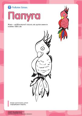 Розмальовка «Папуга»