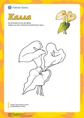 Розмальовка «Калла»