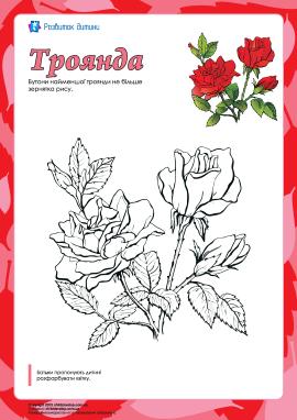 Розмальовка «Троянда»