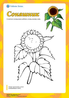 Розмальовка «Соняшник»