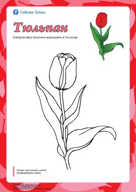 Розмальовка «Тюльпан»