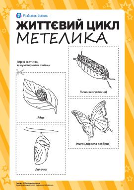 Розмальовка «Життєвий цикл метелика»