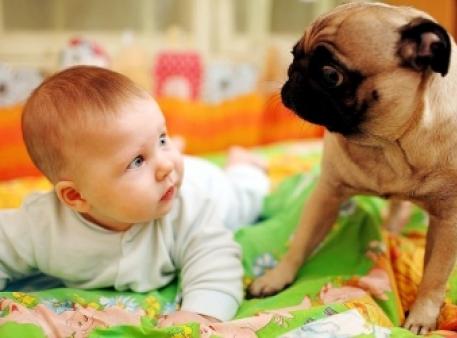 Немовля й собака: правила адаптації
