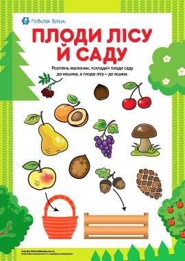 Учимося розрізняти плоди лісу й саду