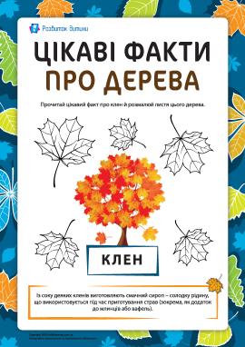 Цікаві факти про дерева: клен