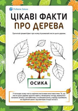 Цікаві факти про дерева: осика