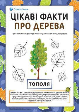 Цікаві факти про дерева: тополя