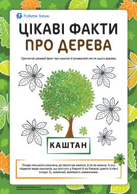 Цікаві факти про дерева: каштан