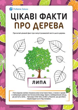 Цікаві факти про дерева: липа