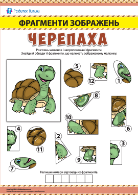 №4 Шукаємо фрагменти зображень: черепаха
