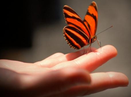 Чого ми можемо навчитися в метелика