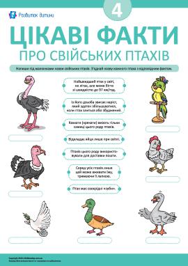 Дізнаємося цікаві факти про свійських птахів