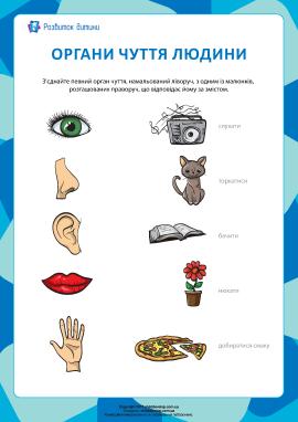 Вивчаємо п'ять органів чуття
