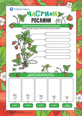 Вивчаємо частини рослини