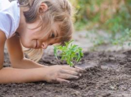 Цікава екологія для школярів молодших класів